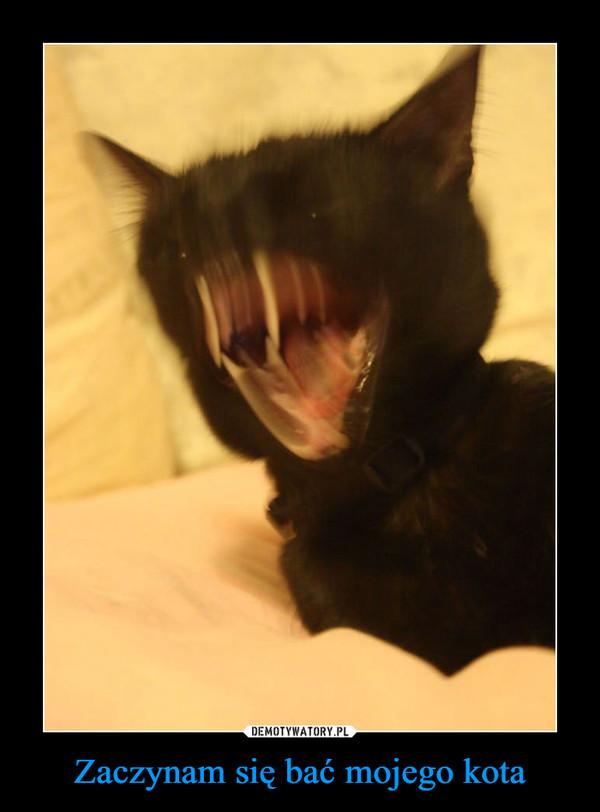 Zaczynam się bać mojego kota –