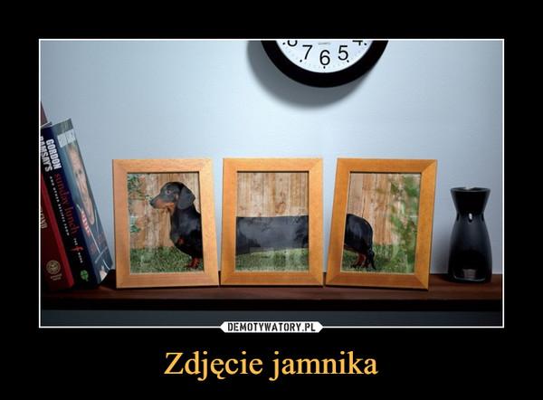 Zdjęcie jamnika –