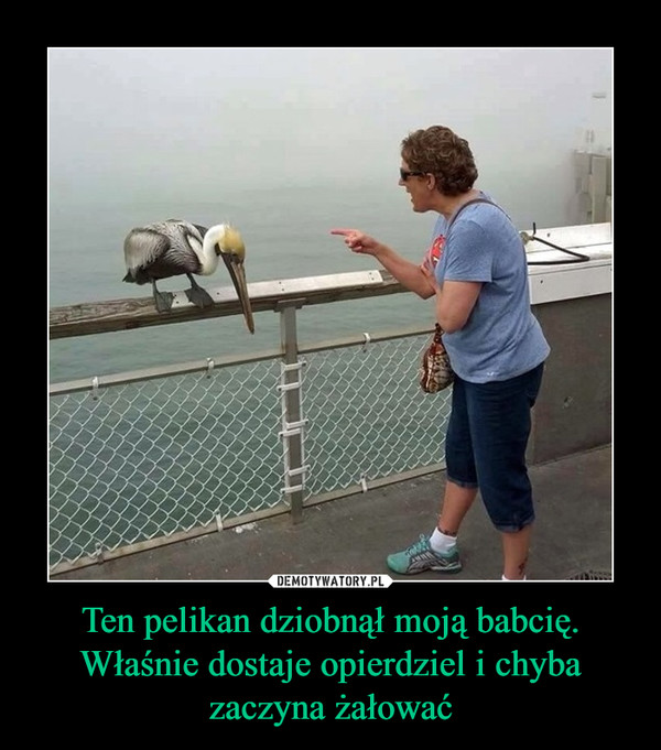 Ten pelikan dziobnął moją babcię. Właśnie dostaje opierdziel i chyba zaczyna żałować –