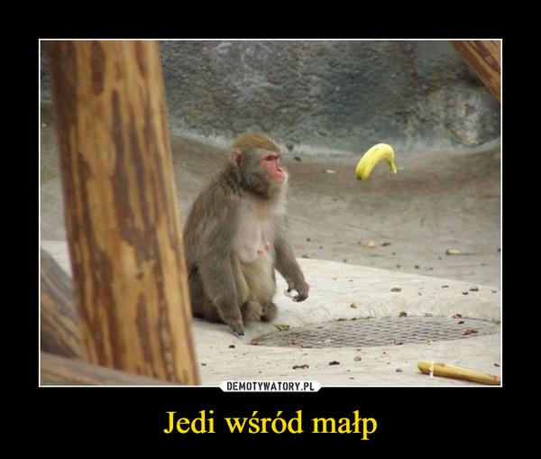 Jedi wśród małp –