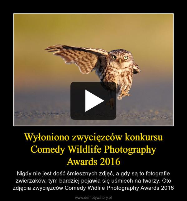 Wyłoniono zwycięzców konkursu Comedy Wildlife PhotographyAwards 2016 – Nigdy nie jest dość śmiesznych zdjęć, a gdy są to fotografie zwierzaków, tym bardziej pojawia się uśmiech na twarzy. Oto zdjęcia zwycięzców Comedy Widlife Photography Awards 2016