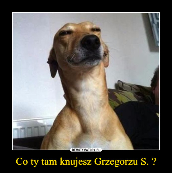 Co ty tam knujesz Grzegorzu S. ? –