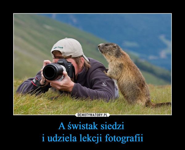 A świstak siedzi i udziela lekcji fotografii –