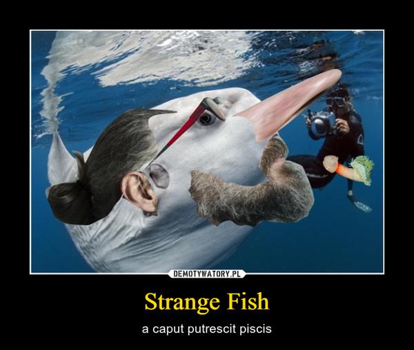 Strange Fish – a caput putrescit piscis
