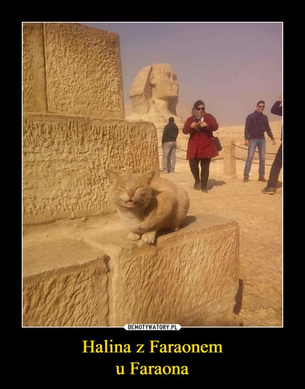 Halina z Faraonemu Faraona –