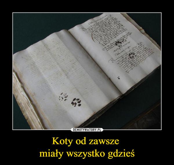 Koty od zawsze miały wszystko gdzieś –