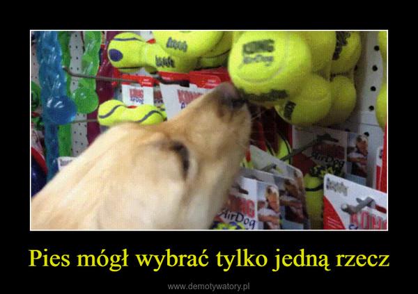 Pies mógł wybrać tylko jedną rzecz –