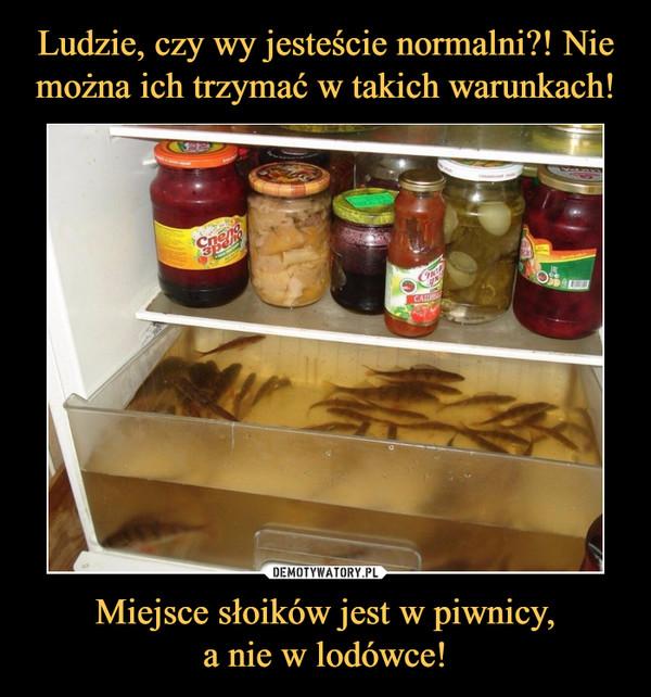 Miejsce słoików jest w piwnicy,a nie w lodówce! –