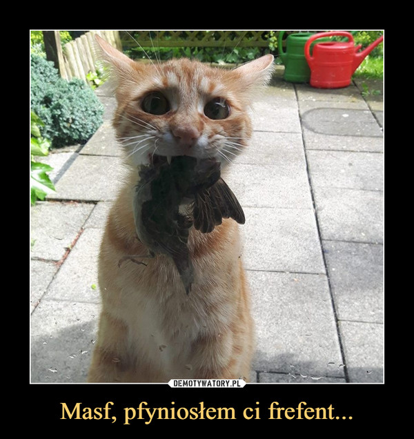 Masf, pfyniosłem ci frefent... –