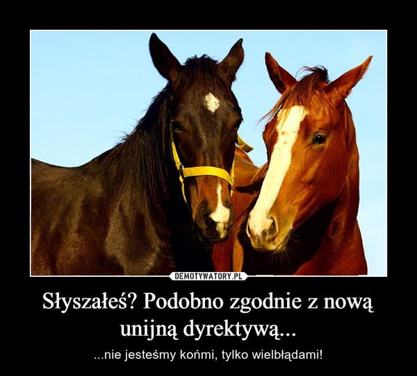 Słyszałeś? Podobno zgodnie z nową unijną dyrektywą... – ...nie jesteśmy końmi, tylko wielbłądami!
