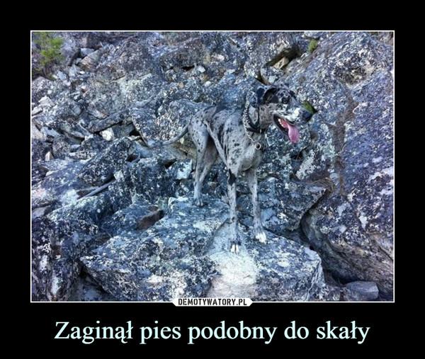 Zaginął pies podobny do skały –