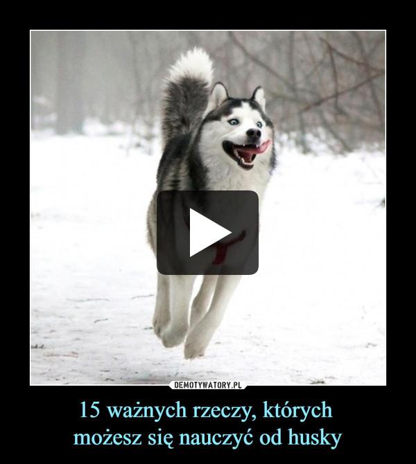 15 ważnych rzeczy, których możesz się nauczyć od husky –