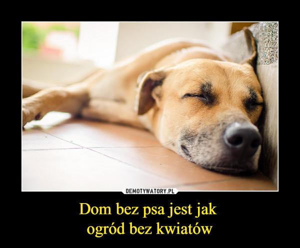 Dom bez psa jest jak ogród bez kwiatów –