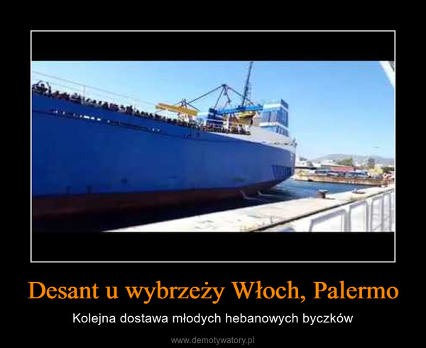 Desant u wybrzeży Włoch, Palermo – Kolejna dostawa młodych hebanowych byczków