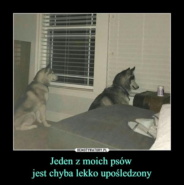 Jeden z moich psów jest chyba lekko upośledzony –