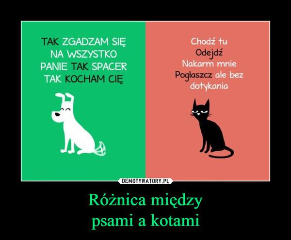 Różnica międzypsami a kotami –  TAKKOCHAM CIĘSPACERChodź tuOdejdźNakarm mniePogłaszcz ale bez dotykania