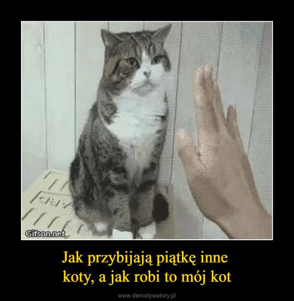 Jak przybijają piątkę inne koty, a jak robi to mój kot –