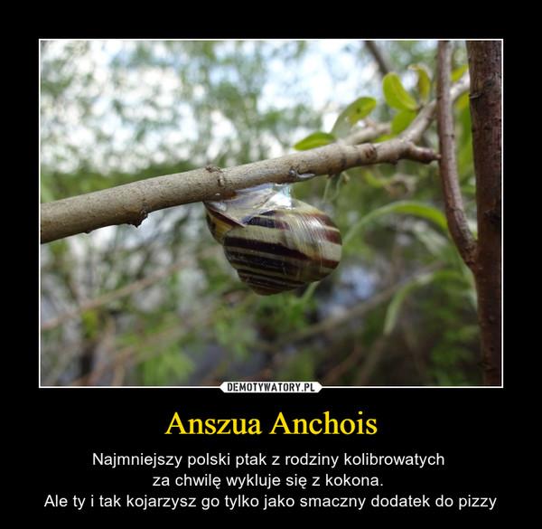 Anszua Anchois – Najmniejszy polski ptak z rodziny kolibrowatych za chwilę wykluje się z kokona. Ale ty i tak kojarzysz go tylko jako smaczny dodatek do pizzy