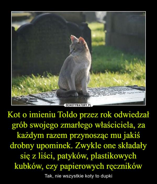 Kot o imieniu Toldo przez rok odwiedzał grób swojego zmarłego właściciela, za każdym razem przynosząc mu jakiś drobny upominek. Zwykle one składały się z liści, patyków, plastikowych kubków, czy papierowych ręczników – Tak, nie wszystkie koty to dupki