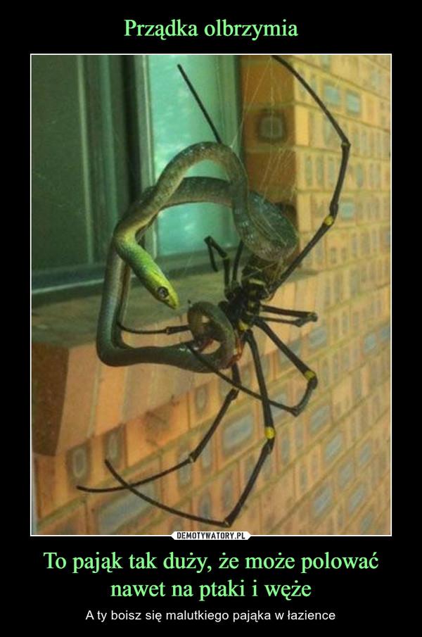 To pająk tak duży, że może polować nawet na ptaki i węże – A ty boisz się malutkiego pająka w łazience