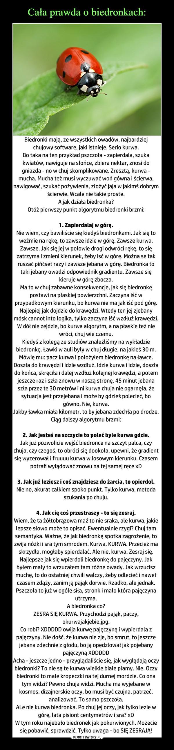 Wiersze Mrówki Wiersz Dydaktyczny Stan21
