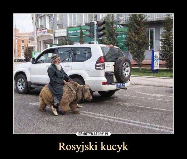 Rosyjski kucyk –