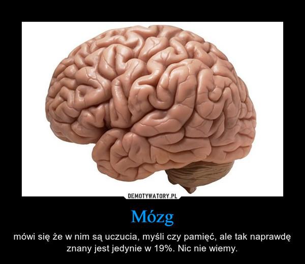 Mózg – mówi się że w nim są uczucia, myśli czy pamięć, ale tak naprawdę znany jest jedynie w 19%. Nic nie wiemy.