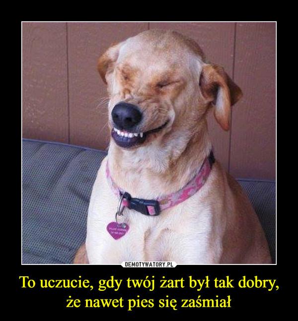 To uczucie, gdy twój żart był tak dobry, że nawet pies się zaśmiał –