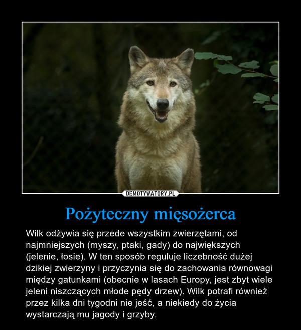Pożyteczny mięsożerca – Wilk odżywia się przede wszystkim zwierzętami, od najmniejszych (myszy, ptaki, gady) do największych (jelenie, łosie). W ten sposób reguluje liczebność dużej dzikiej zwierzyny i przyczynia się do zachowania równowagi między gatunkami (obecnie w lasach Europy, jest zbyt wiele jeleni niszczących młode pędy drzew). Wilk potrafi również przez kilka dni tygodni nie jeść, a niekiedy do życia wystarczają mu jagody i grzyby.