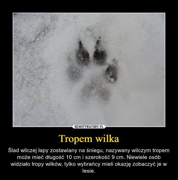 Tropem wilka – Ślad wilczej łapy zostawiany na śniegu, nazywany wilczym tropem może mieć długość 10 cm i szerokość 9 cm. Niewiele osób widziało tropy wilków, tylko wybrańcy mieli okazję zobaczyć je w lesie.