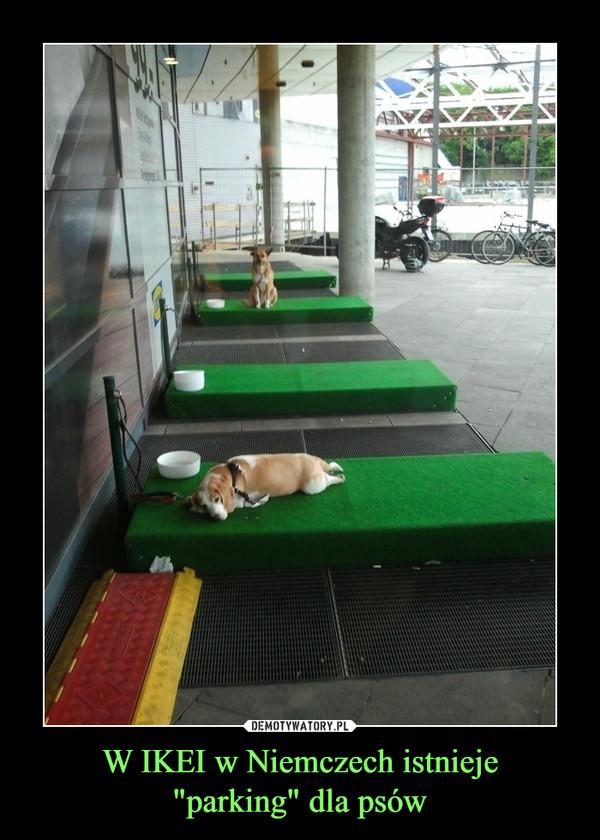 """W IKEI w Niemczech istnieje""""parking"""" dla psów –"""
