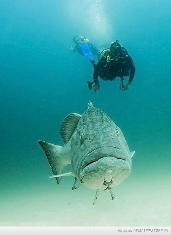 Podwodne towarzystwo –