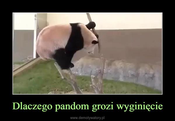Dlaczego pandom grozi wyginięcie –