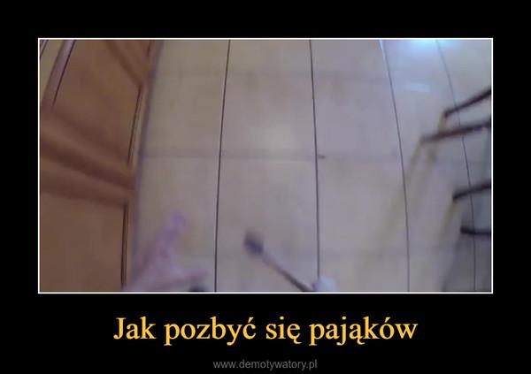 Jak pozbyć się pająków –