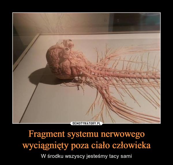Fragment systemu nerwowego wyciągnięty poza ciało człowieka – W środku wszyscy jesteśmy tacy sami