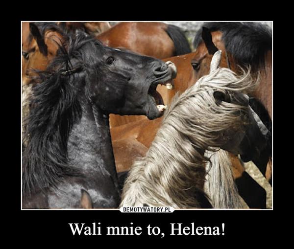 Wali mnie to, Helena! –