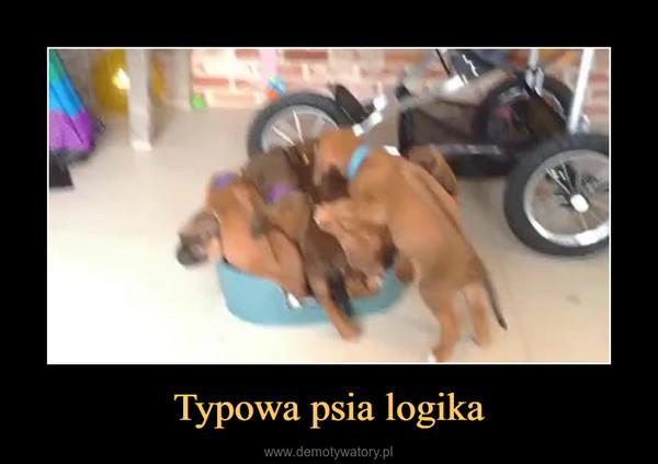 Typowa psia logika –