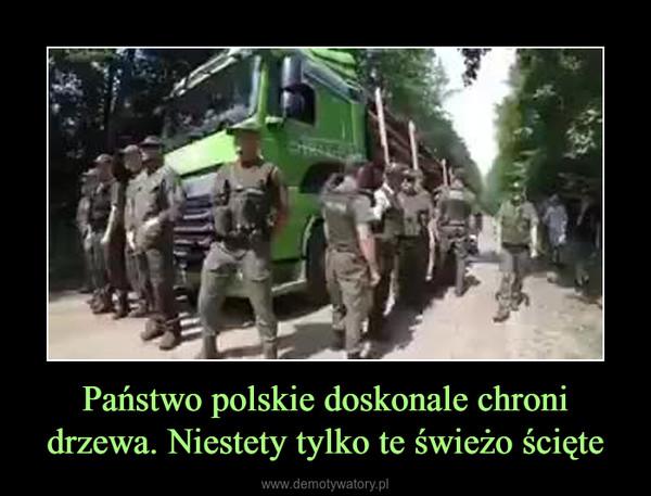 Państwo polskie doskonale chroni drzewa. Niestety tylko te świeżo ścięte –