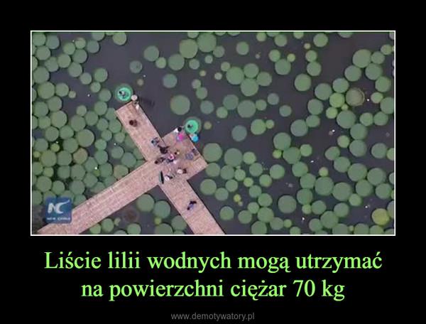 Liście lilii wodnych mogą utrzymaćna powierzchni ciężar 70 kg –