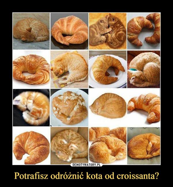 Potrafisz odróżnić kota od croissanta? –