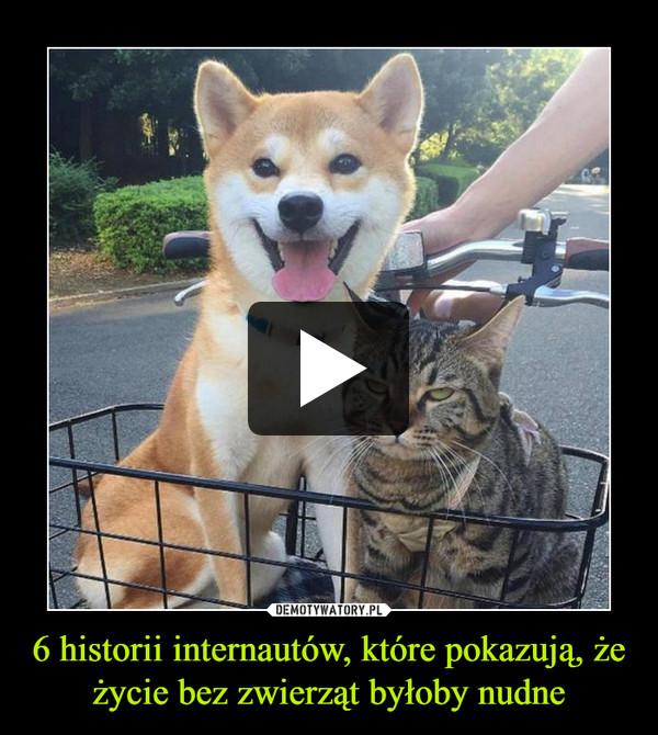 6 historii internautów, które pokazują, że życie bez zwierząt byłoby nudne –