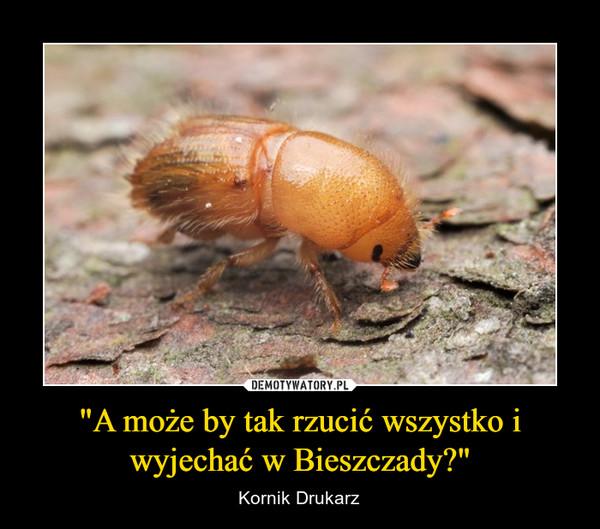 """""""A może by tak rzucić wszystko i wyjechać w Bieszczady?"""" – Kornik Drukarz"""