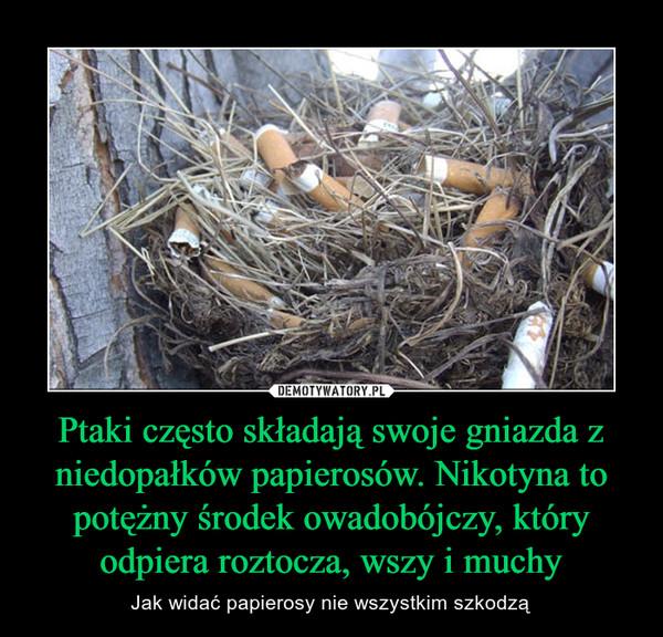 Ptaki często składają swoje gniazda z niedopałków papierosów. Nikotyna to potężny środek owadobójczy, który odpiera roztocza, wszy i muchy – Jak widać papierosy nie wszystkim szkodzą