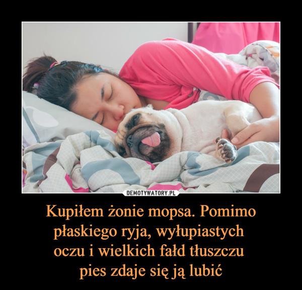 Kupiłem żonie mopsa. Pomimo płaskiego ryja, wyłupiastych oczu i wielkich fałd tłuszczu pies zdaje się ją lubić –
