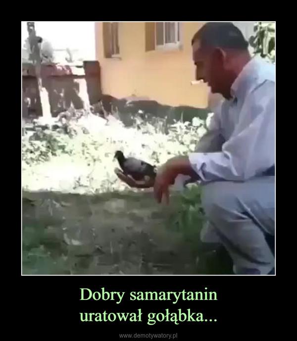 Dobry samarytaninuratował gołąbka... –