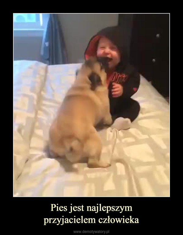 Pies jest najlepszymprzyjacielem człowieka –