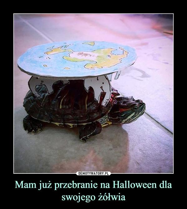 Mam już przebranie na Halloween dla swojego żółwia –