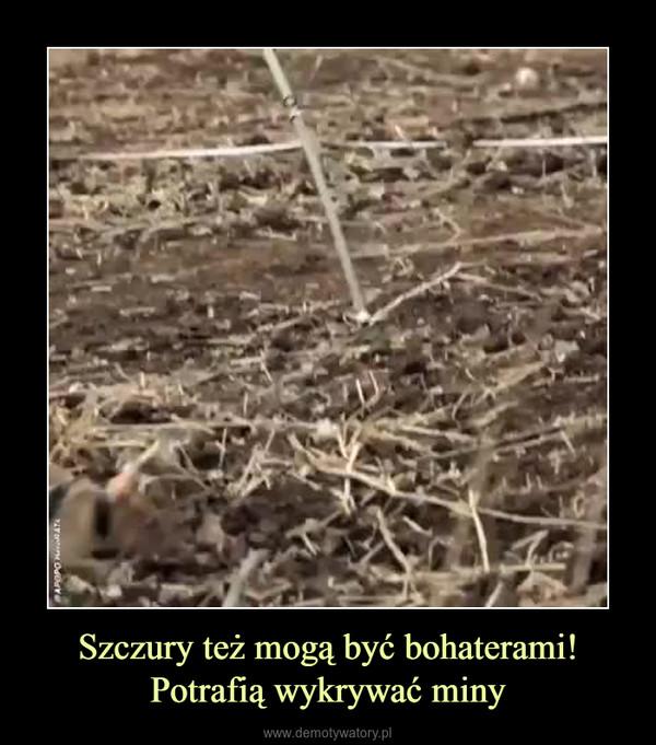 Szczury też mogą być bohaterami!Potrafią wykrywać miny –