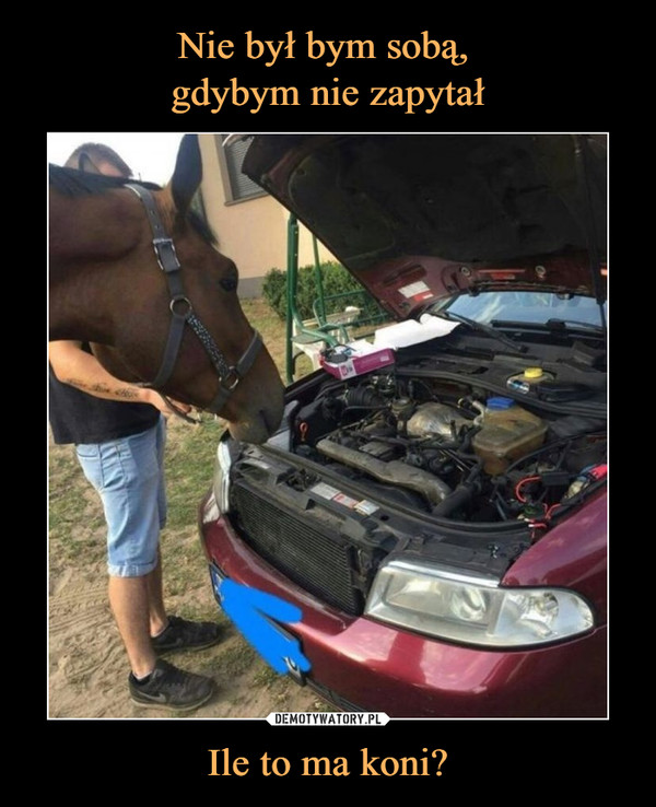 Ile to ma koni? –