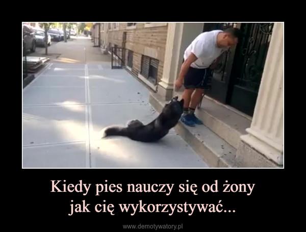 Kiedy pies nauczy się od żonyjak cię wykorzystywać... –